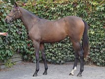 Lot no. 262 at Goffs Orby Yearling Sale 2018