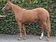 Lot no. 264 at Goffs Orby Yearling Sale 2018