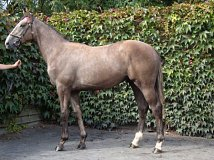 Lot no. 103 at Goffs Orby Yearling Sale 2018